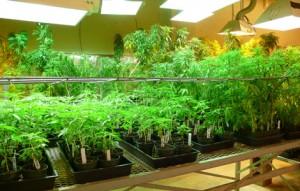 Basement Horticulture