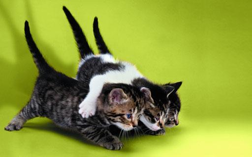 Kittens_low
