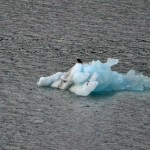 Tracy Arm Fiord | Eagle