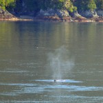 Tracy Arm Fiord | Whale