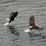 More Eagles